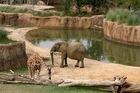 elephant and giraffe in zoo